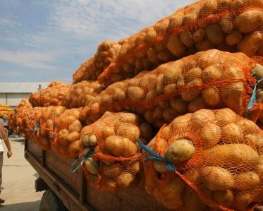 cartofi2.jpg