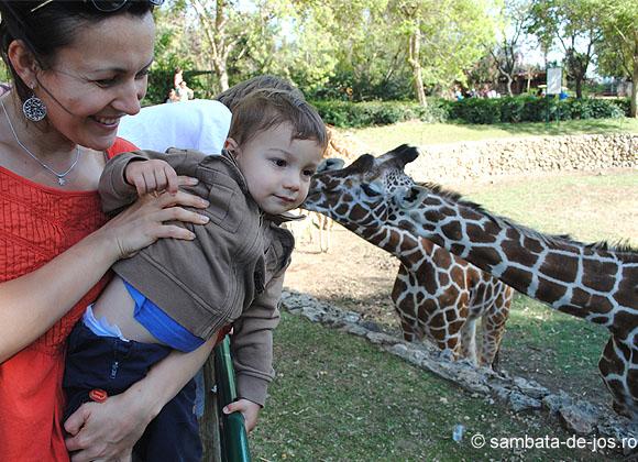 sambata_de_jos_israel_2012_mirela_andrei_girafa.jpg